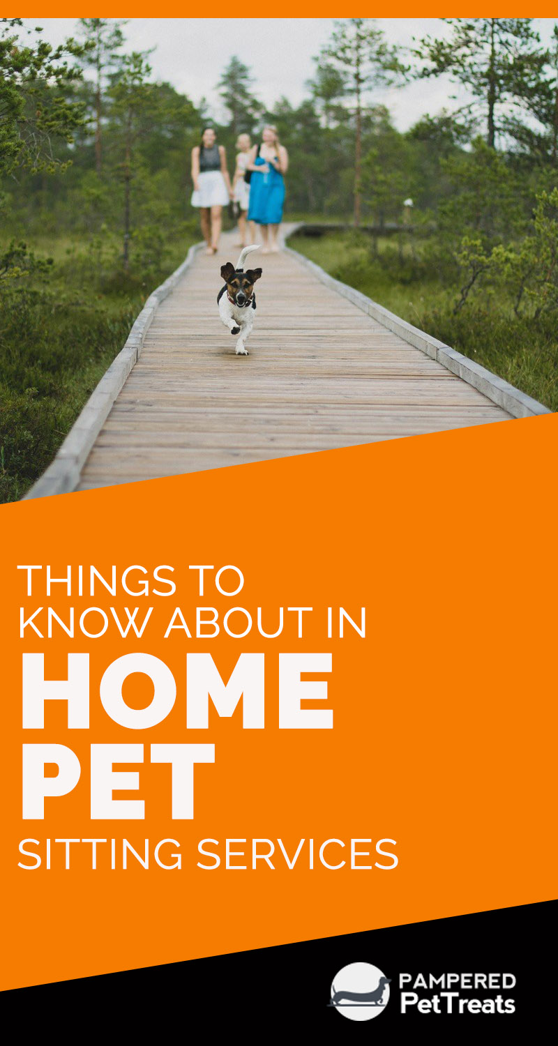 Things to Know About in Home Pet Sitting Services
