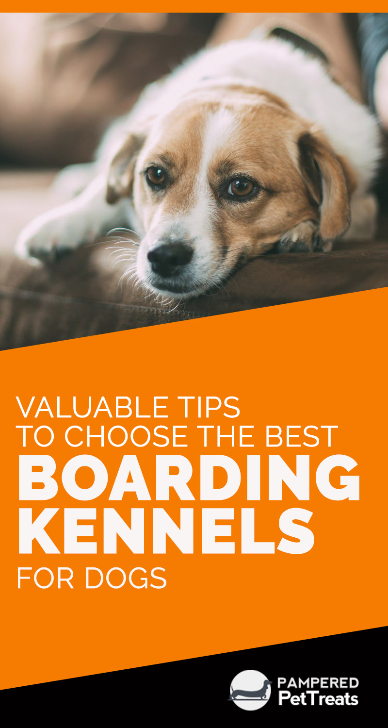 Valuable Tips to Choose the Best Boarding Kennels for Dogs