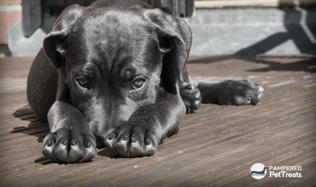 Choosing the Right Dog Treats for Your Canine Companion